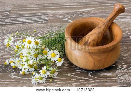 Medical Chamomile