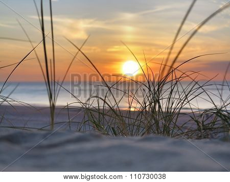 sunset and beach grass