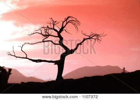 Tree In Red Sunset