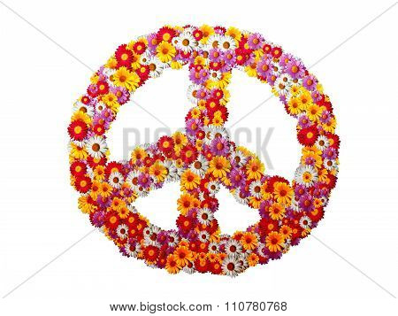 Peace Sign With Garden Pyrethrum