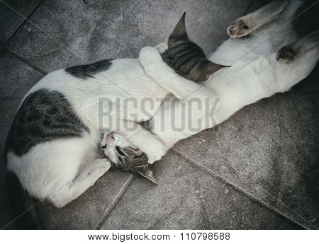 Two Cats Fighting Or Playing On The Street.