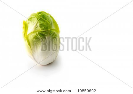 Endive standing with plenty of copy space. Endive isolated on white.