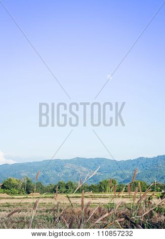 Mountain And Rice Field In The Evening