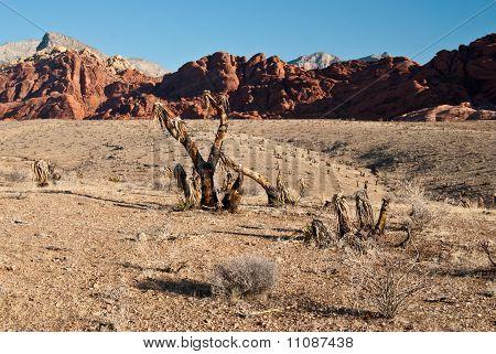 Desert Views Of Red Rock Canyon