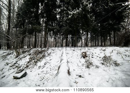 Beautiful calm roan on a deck .winter day. Carpathians. National