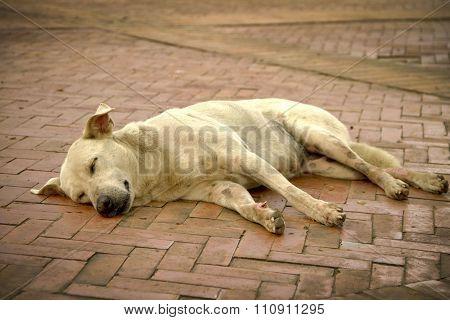 Tired street mutt lying on cobblestone sidewalk