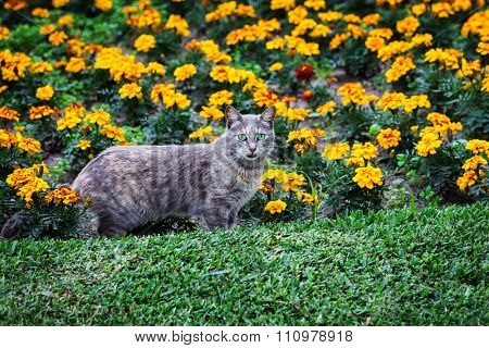 cat and flower bed summer day