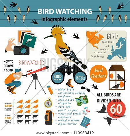 Bird watching infographic template