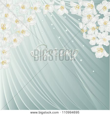 Spring Blue Background With Blossoms Jasmine Vector