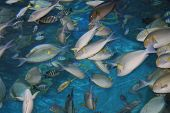 Tropical fish in Siam ocean world in Thailand. poster