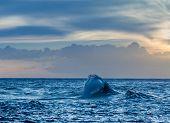 Wave forms a complex structure at sunset off Ke'e Beach Kauai Hawaii poster