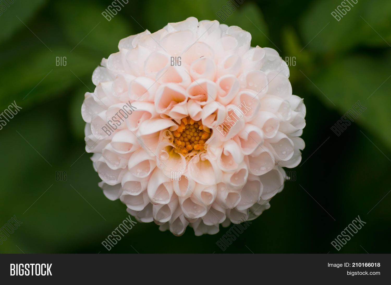 Clsoe Beautiful White Image Photo Free Trial Bigstock