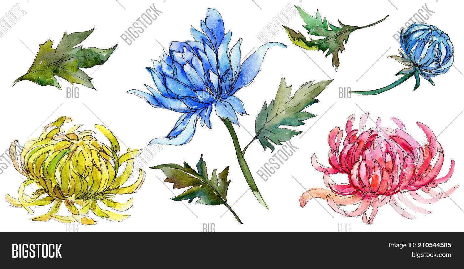 Wildflower image photo free trial bigstock wildflower chrysanthemum flower in a watercolor style isolated full name of the plant golden izmirmasajfo