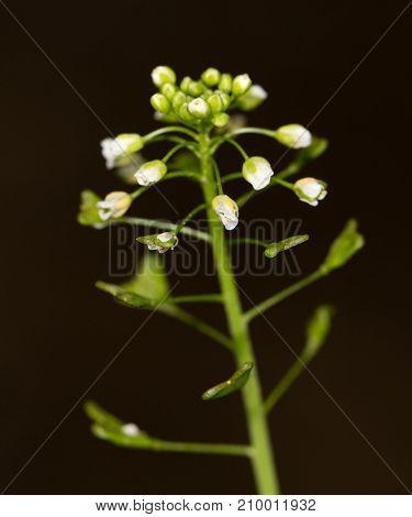 flowering herbs in nature .