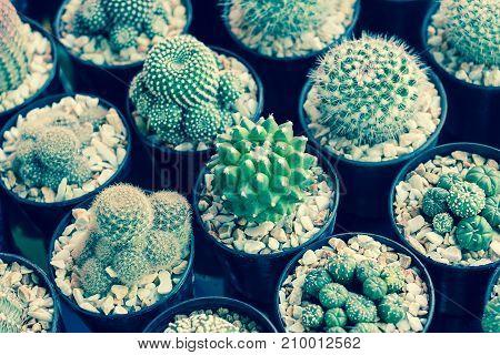 Cactus or succulents in plastic pot at tree market for decoration and landscape idea concept design. Vintage style