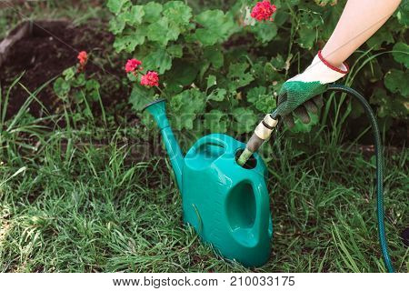 Filling up watering can with a hose to water the garden