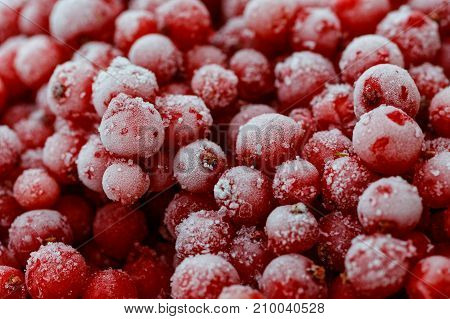 Background of frozen redcurrants. White frost on berries.