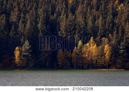 Autumn landscape of a beautiful foggy forest