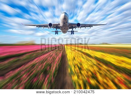 Airplane in motion. Landscape with passenger airplane is flying in blurred blue sky with clouds over the flowers field at sunset. Passenger airliner is landing. Commercial plane and blurred tulips