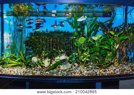 The close up of aquarium tank full of fish