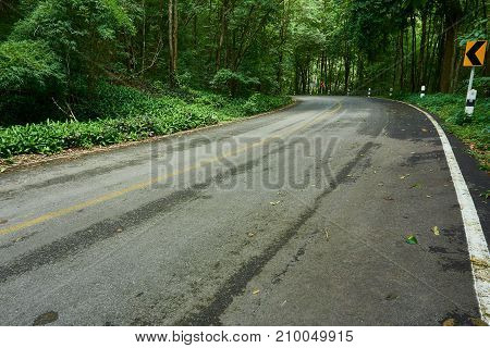 The Road in to the tropical rainforest.