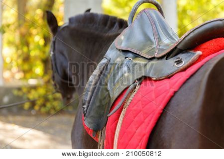 Horse. Brown horse with a red saddle in the park. The concept of nature and animals.