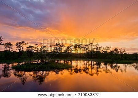 Sunset in the bog golden marsh lakes and nature environment. Sundown evening light and rain poster