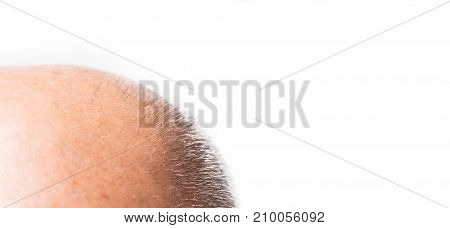bald man on white background bald man