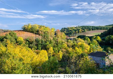 Autumn colors in Beaujolais forest and vineyard
