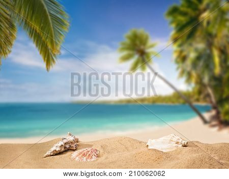 Paradiseous lagoon with beach palm trees and shells