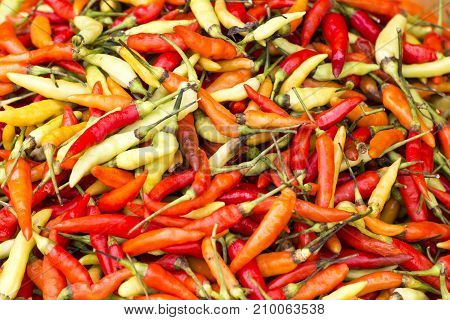 Red chili pepper wallpaper market in Indonesia