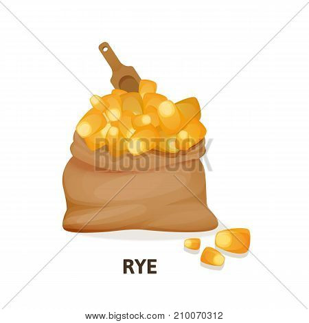Concept of grain crops in bags. Bag of rye culture and wooden spoon, cereal wheat, herbaceous plant, an agricultural crop, useful natural organic food, dishes. Bread wheat. Vector illustration.