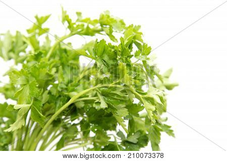 parsley on a white background . Photos in the studio