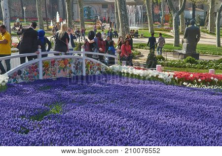 Istanbul Turkey - April 06 2016 Annual Spring Festival of Tulips new design Gulhane Park wedding also came to park. Local people and tourists are getting rest making photos and enjoy good weather and spring slice of life editorial.