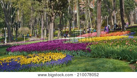 Istanbul Turkey - April 06 2016 Annual Spring Festival of Tulips new design Gulhane Park local people and tourists are getting rest making photos and enjoy good weather and spring slice of life editorial.