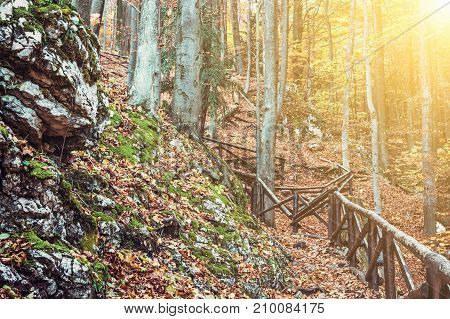 Hiking path with railing in the autumn deciduous forest. Seasonal natural scene. Tourism theme. Vibrant colors. Yellow sun rays.