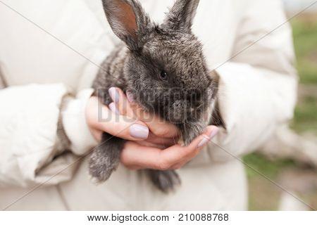 Grey Rabbit In Girls Hands Outdoor