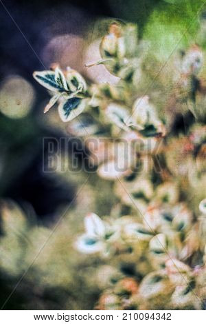 Artistic Leafs Background with filters applied Vintage Look and Soft Focus