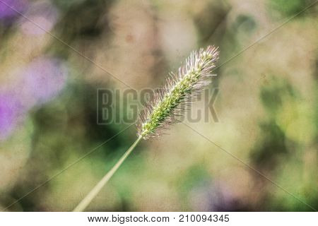 Nature Background with filters applied Vintage Look and Soft Focus using very shallow depth of field