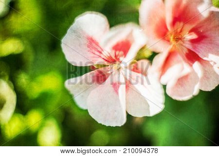 Artistic Flowers Background with filters applied Vintage Look and Soft Focus