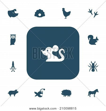 Set Of 13 Editable Animal Icons. Includes Symbols Such As Footprint, Fish, Cock And More