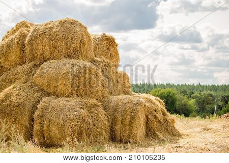 Bales Of Yellow Golden Straw Stacked In A Pile At The Farm With Blue Sky On The Background . Food Fo
