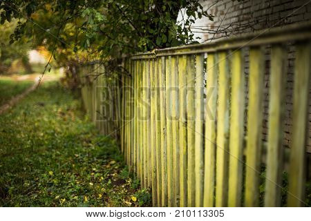 Old wooden green fence. Autumn road in the village. Green branches of a tree above a fence.