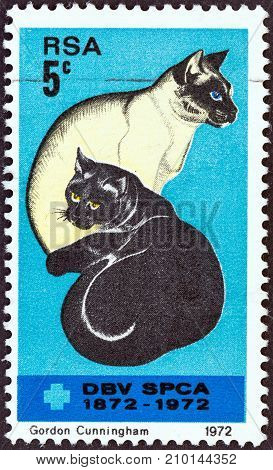 SOUTH AFRICA - CIRCA 1972: A stamp printed in South Africa issued for the Centenary of Societies for the Prevention of Cruelty to Animals shows Black and Siamese Cats, circa 1972.
