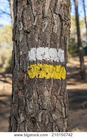 White and yellow marks of a Short Waymarked Path (PR) on the trunk of Aleppo Pine. Photo taken in Buendia Cuenca Spain.