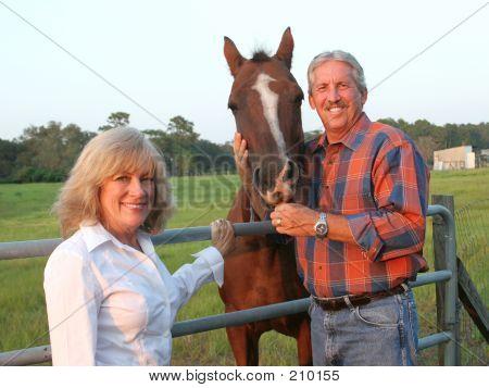 馬をカップルします。