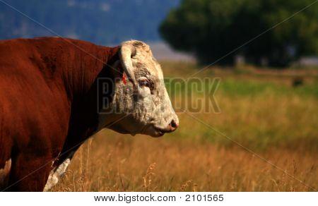 Bull Market 4