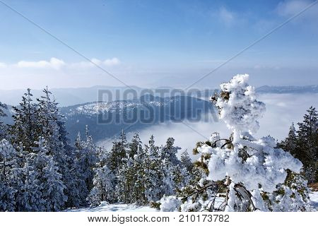 view of beautiful snowy sunshine winter landscape in the mountains on sunny day