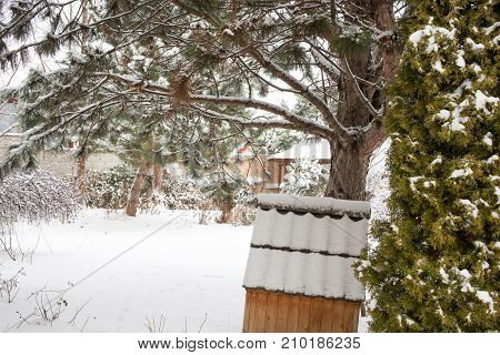 Snow covered backyard with trees. Winter landscape.