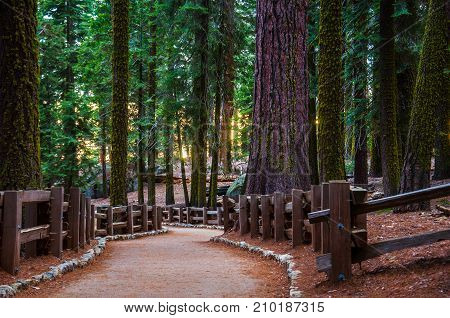 Trail winds through a redwoods forest in Sequoia National Park in California